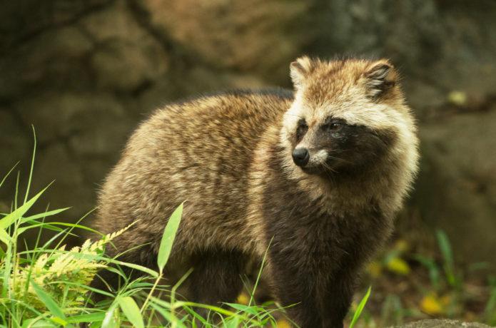 日本文化大学周辺に住む野生動物